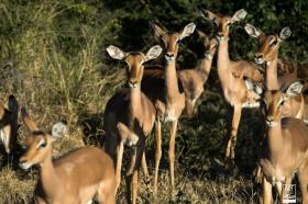 african_safari_photos_madekwi_wildlife_animals_africa_004
