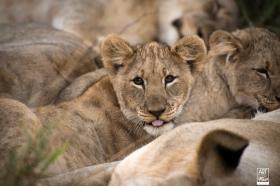 african_safari_photos_madekwi_wildlife_animals_africa_006