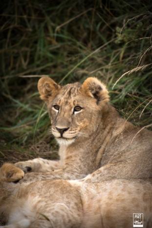african_safari_photos_madekwi_wildlife_animals_africa_008