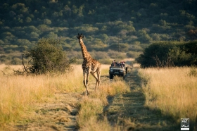 african_safari_photos_madekwi_wildlife_animals_africa_010