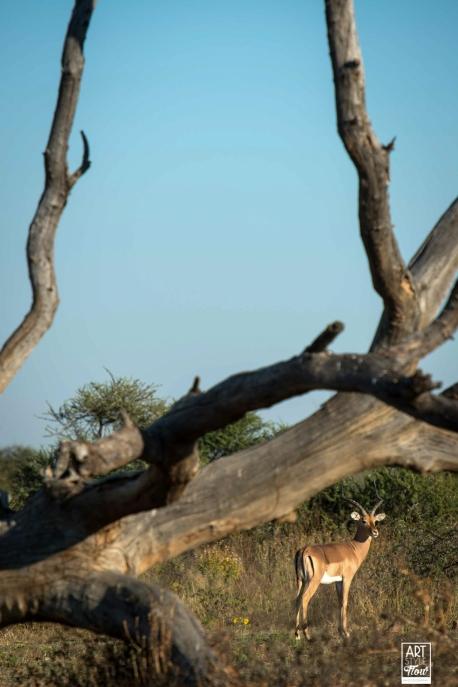 african_safari_photos_madekwi_wildlife_animals_africa_012