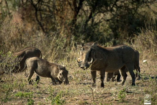 african_safari_photos_madekwi_wildlife_animals_africa_014
