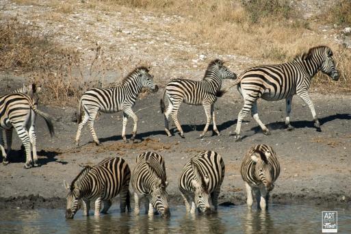 african_safari_photos_madekwi_wildlife_animals_africa_018