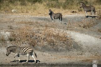 african_safari_photos_madekwi_wildlife_animals_africa_020