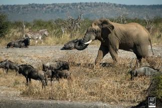 african_safari_photos_madekwi_wildlife_animals_africa_021