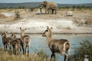 african_safari_photos_madekwi_wildlife_animals_africa_023