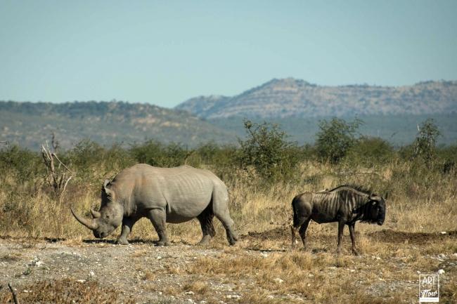 african_safari_photos_madekwi_wildlife_animals_africa_025