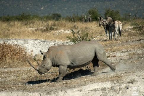 african_safari_photos_madekwi_wildlife_animals_africa_026