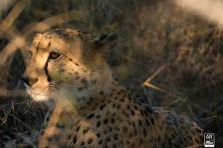african_safari_photos_madekwi_wildlife_animals_africa_029