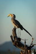 african_safari_photos_madekwi_wildlife_animals_africa_033