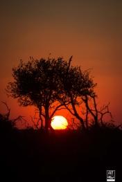 african_safari_photos_madekwi_wildlife_animals_africa_034