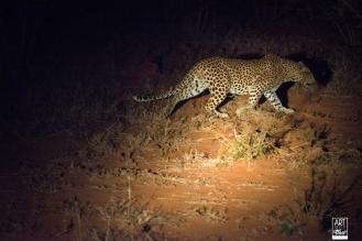 african_safari_photos_madekwi_wildlife_animals_africa_035