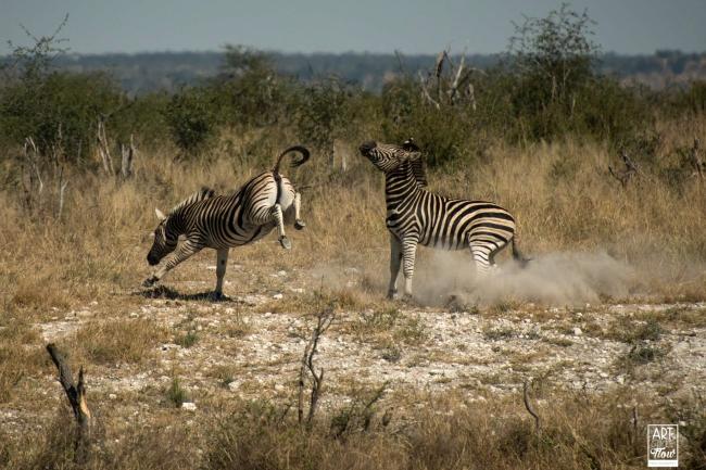 african_safari_photos_madekwi_wildlife_animals_africa_038