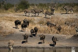 african_safari_photos_madekwi_wildlife_animals_africa_039