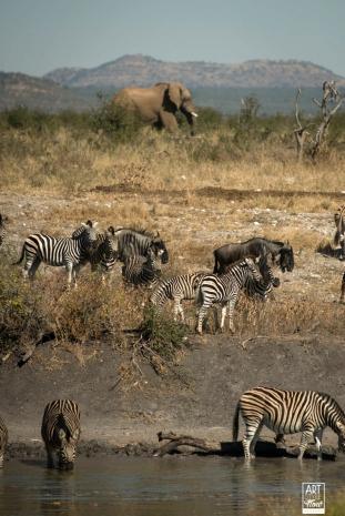 african_safari_photos_madekwi_wildlife_animals_africa_041