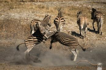 african_safari_photos_madekwi_wildlife_animals_africa_043