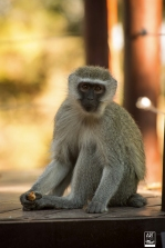 african_safari_photos_madekwi_wildlife_animals_africa_044