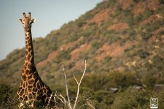 african_safari_photos_madekwi_wildlife_animals_africa_047