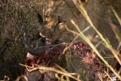 african_safari_photos_madekwi_wildlife_animals_africa_048