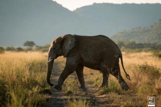 african_safari_photos_madekwi_wildlife_animals_africa_051