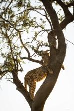 african_safari_photos_madekwi_wildlife_animals_africa_054